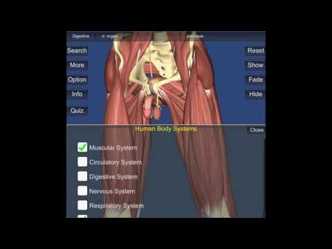 3D Bones and Organs (Anatomy) screenshot for Android