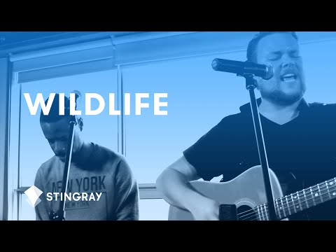 Wildlife - Lightening Tent (Live Session)