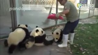 naughty panda resistance care cleaning