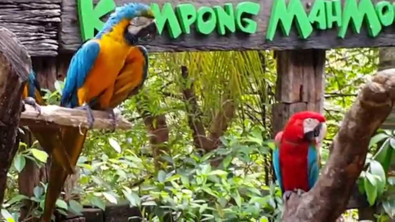Parrot Farm Malaysia Farm in The City Malaysia 城の