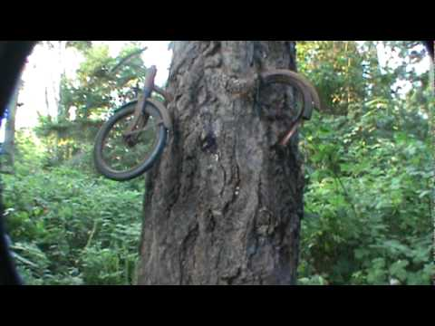 bike in tree vashon Island