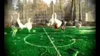 মুরগির ফুটবল খেলা
