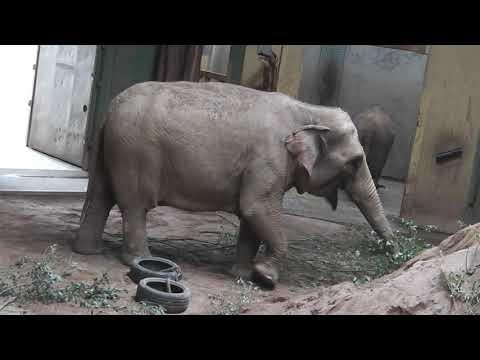 Zoo Osnabrück: Luchse Leonie und Veli - Asiatischer Elefant Minh-Tan