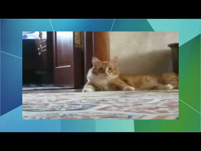Videos chistosos: gatos graciosos loquendo