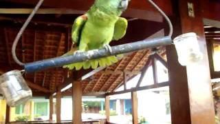 Atirei o Pau no Gato - Lorinho Bonito - MS.