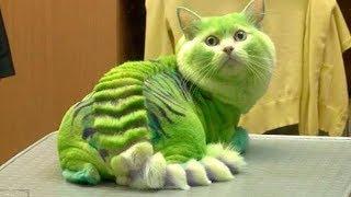 10 MOST DANGEROUS CAT BREEDS