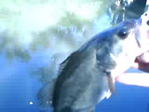 Bass Fishing on the chicago river
