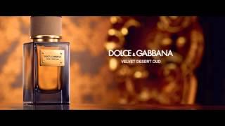 dolce & gabbana velvet tender oud