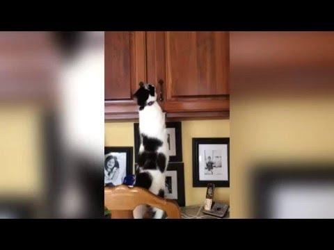 食器棚に隠れる忍び猫。