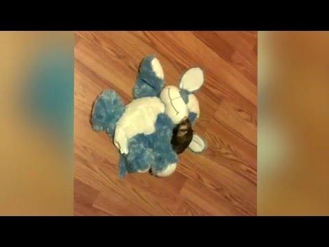 不思議なダンスをする犬のおもちゃを影で操る正体は?!