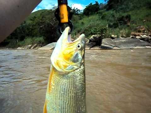 Marquinho de Tó pescando Dourado Rio Doce, Dom Silvério MG