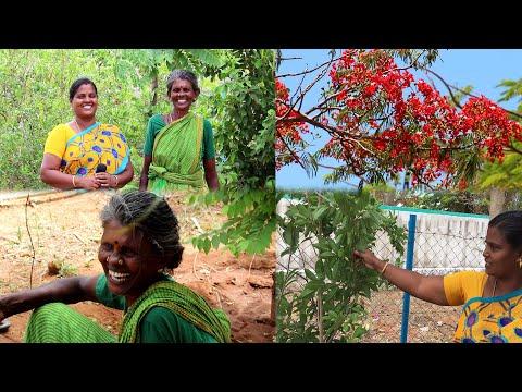 அண்ணி வீட்டுத் தோட்டம் / Vlog /  Periya Amma Samayal