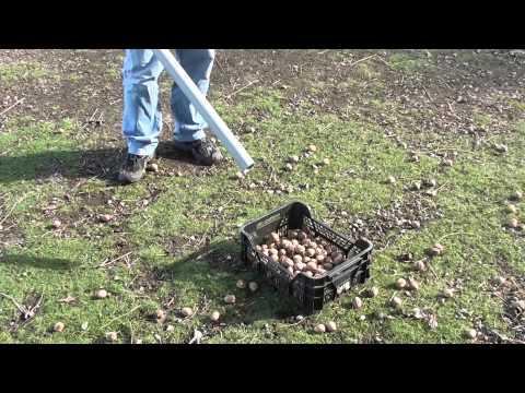 Sběrač ořechů