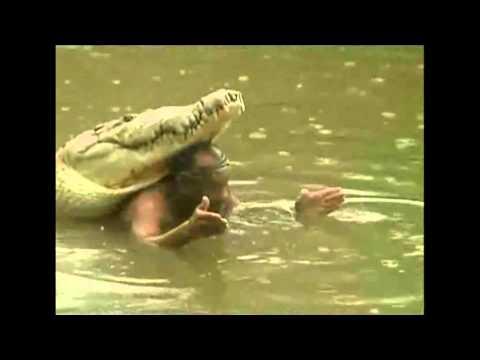 Chito y Pocho, la amistad de hombre y cocodrilo