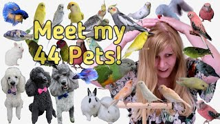 Meet my Pets! All 44 of them!