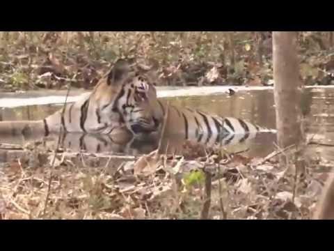 Umred-Karhandla Wildlife Sanctuary, Maharashtra, India