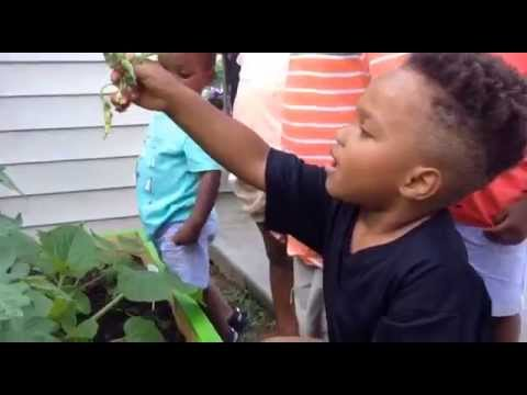 Childcare Provider Grows Healthy Food for Children - Taking Root Tennessee