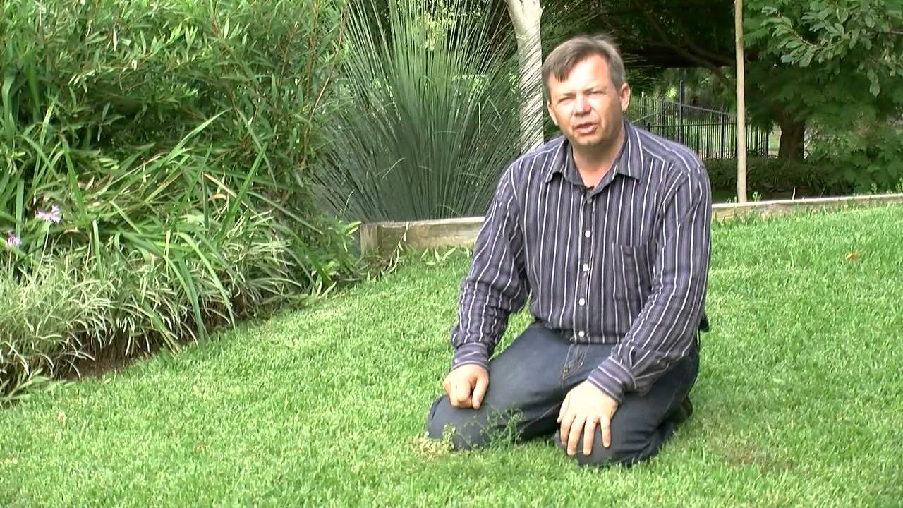 Natural Way To Kill Grass And Weeds Fast