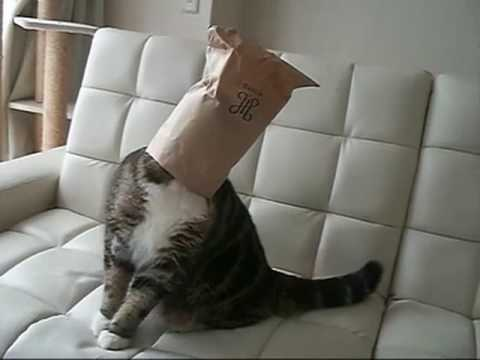 I am Maru. The strangest cat on the planet!