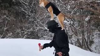 Military training with his dog in the snow