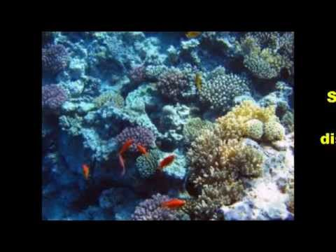 The endangered coral reef