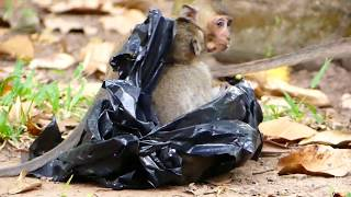 Best Funny Baby Monkey | What Baby Monkey Doing & Funny?