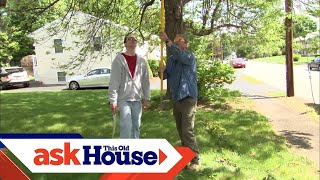 Pruning a Crabapple Tree