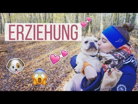 BRUNOS ERZIEHUNG - FRANZÖSISCHE BULLDOGGE ERZIEHUNG | frenchbulldog.bruno