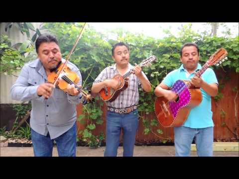 Trio Los Genuinos de Jacala Hidalgo en Houston, Tx