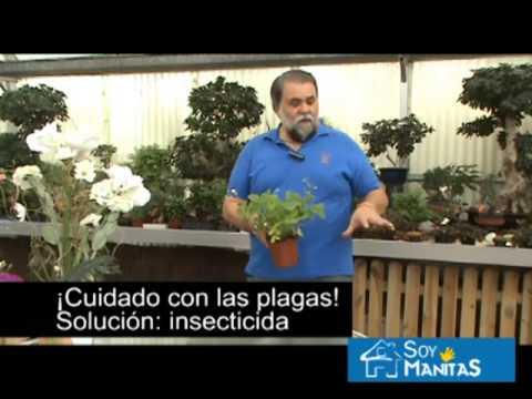Huerto urbano c mo cultivar fresas silvestres en casa for Como cultivar peces en casa