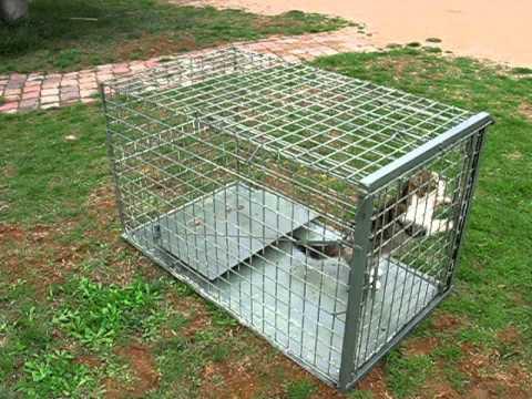 Cage piege sanglier