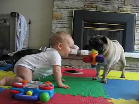 Pug vs. Baby - the neverending battle.