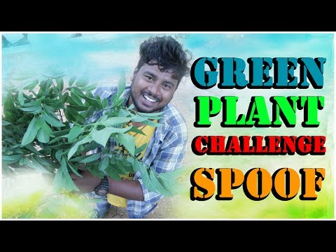 Green Plant Challenge Spoof   Myra Media