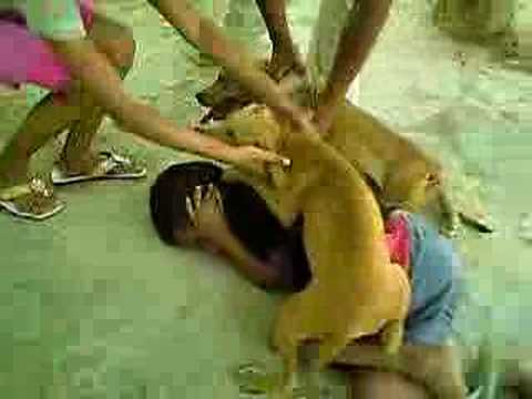 Criança brinca com Pit bull