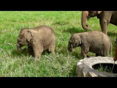 Elephant Nature Park of Thailand