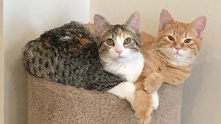 Ohio Company Adopts 2 Office Kitties To Make Work More Enjoyable