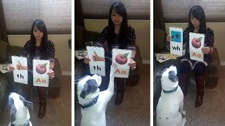 Clever Dog Plays With Picture Cards