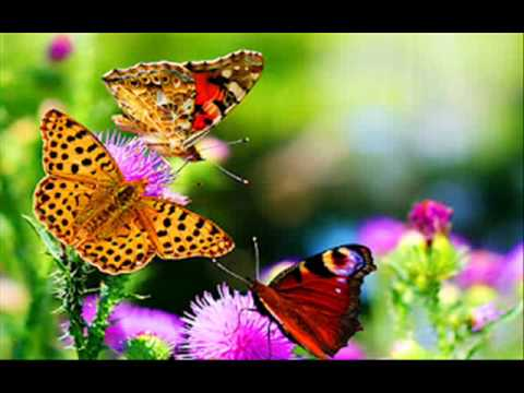 Oh Butterfly.wmv video