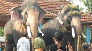 KERALA ELEPHANTS /200+ DOMESTIC & TEMPLE elephants in 20 minutes video
