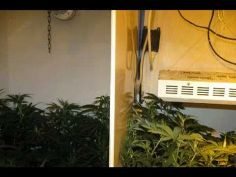 LED vs HPS: 455W LED Grow Light vs 484W HPS Marijuana Grow.mpg