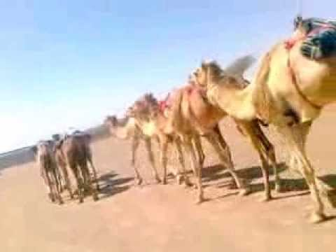 Rajasthani New Songs 2013-2014 video