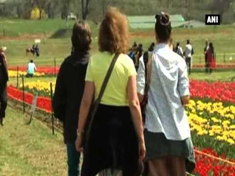 Tourists flock to Asia's biggest tulip garden in Kashmir