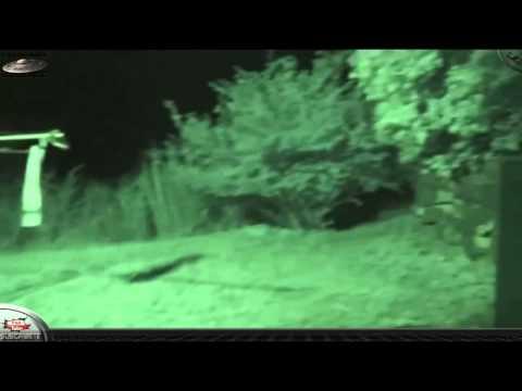 Ufo, Ovni, Vídeo Real 2 Jóvenes Graban un Extraterrestre GRIS July 2015