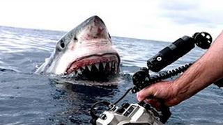 download lagu 5 Horrifying Shark Encounters Caught On Gopro gratis