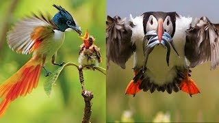 Beautiful Birds Playing, Feeding & Fighting - Best Moments Of Lovely Birds.