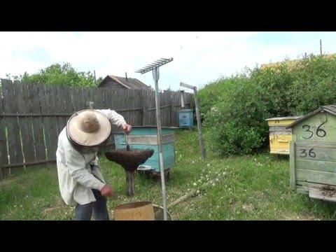 апирой для ловли роя пчел