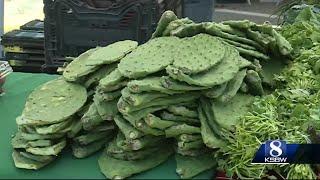 The 7th Annual Cactus Festival happened Sunday in Santa Cruz