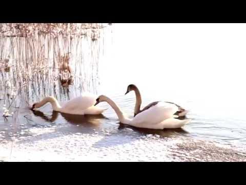Ревякин Дмитрий - Птицы в облаках