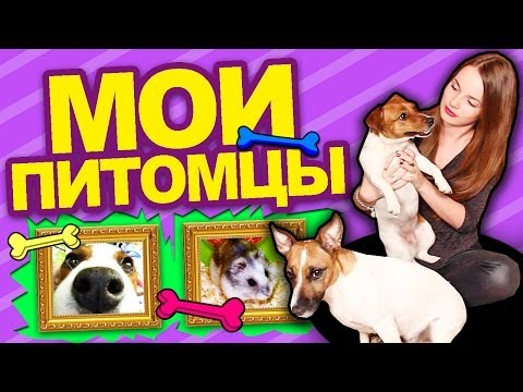 ♥ МОИ ПИТОМЦЫ ♥ Собачки, Пони, Хомячки и Я :D