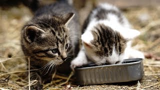 Funny Cats And Kittens Who Don't Want To Share Their Food